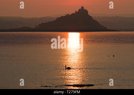 Swan on the sea at Mounts Bay in front of St Michaels mount at sunrise - Stock Photo
