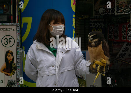 You can visit the Owl Cafe and handle different types of owls, snakes, and bats. People spend hours there and say it is amazing! - Stock Photo