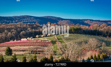 Pear Peach and Cherry Trees Growing along hillside in the Rural Countryside of Virginia on a sunny outdoor day. - Stock Photo