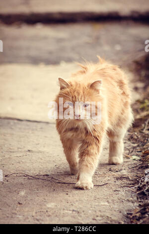 Stray street red cat. Homeless cat. A homeless animal. Cat on the street - Stock Photo