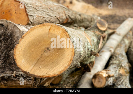 Logging operations - Stock Photo