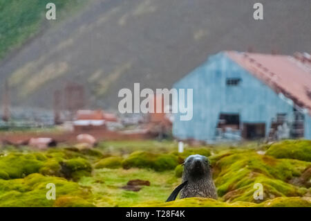 Stromness Whaling Station on South Georgia - Stock Photo