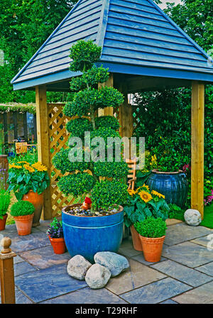 A colourful urban garden with planted containers of flowers and a cloud pruned topiary tree with covered seating area - Stock Photo