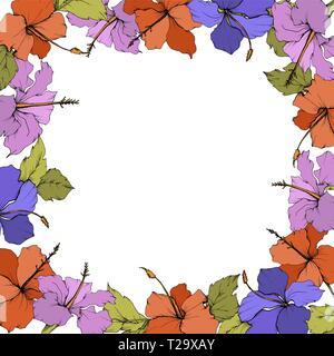 Vector Hibiscus floral botanical flower. Engraved ink art. Frame border ornament square. - Stock Photo