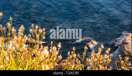 Wild plants with white flowers, on blue sea water background. Sunny day in spring - Stock Photo