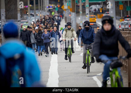 Cyclists biking over  Brooklyn Bridge  Manhattan, New York in dedicated cycle lane as tourists walk in their lane - Stock Photo