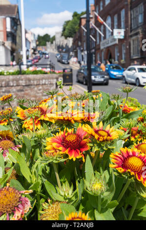 Display of Gaillardia blanket flowers in Summer in the High Street in Arundel, West Sussex, England, UK. - Stock Photo