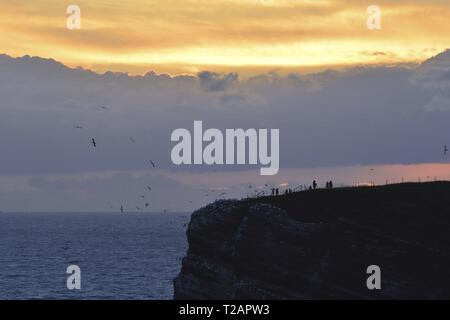 Heligoland's bird rocks at sunset with bird watchers on the uplands and the North Sea in the depth, 25 June 2017 | usage worldwide - Stock Photo