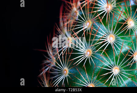 A small green cactus with bright orange spines is photographed up close in high detail. - Stock Photo