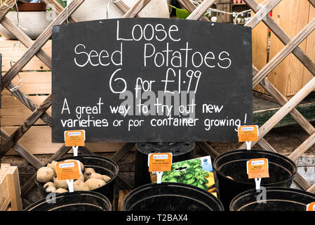 Promotion of loose seed potatoes of mixed varieties for trial planting in customers' gardens. Display in an English garden centre iin Wiltshire UK - Stock Photo