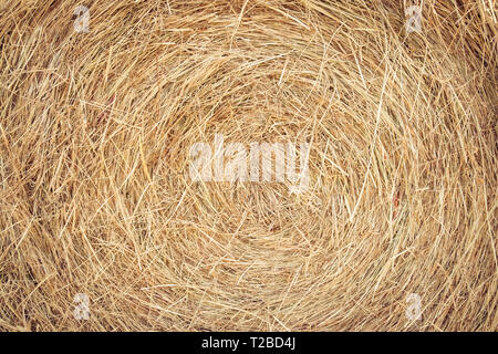 Close-up of a bail of hay. Dry grass background. Straw texture. - Stock Photo