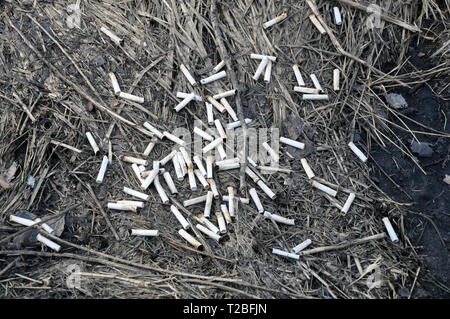 Cigarette butts on the lawn of the city in the spring after the snow melts. ecology - Stock Photo