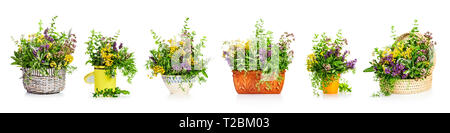 Garden herbs and flowers in different kitchen containers and flower pot collection isolated on white background. Design elements banner. Gardening and - Stock Photo