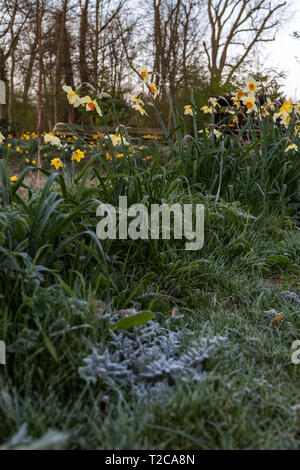 Henlow, Bedfordshire, UK. 1st Apr, 2019. A cold frosty start to the day at Henlow Bridge Lakes campsite in Bedfordshire. Credit: Mick Flynn/Alamy Live News - Stock Photo