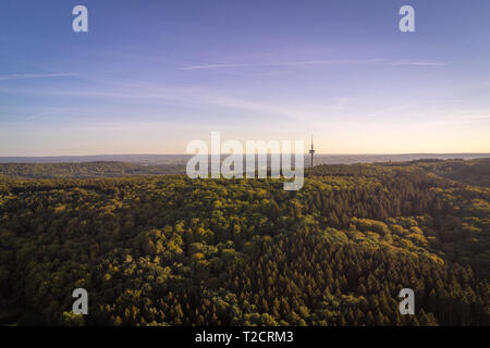 Mixed tree forrest covering hills in the Eifel region in West Germany with setting sunlight - Stock Photo