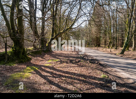 View along the East Hill Strips, near Ottery St Mary, Devon - Stock Photo