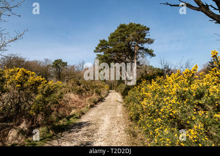 Core Hill Wood, above Sidmouth, Devon, part of the Woodland Trust, with footpaths and good walk walking. - Stock Photo