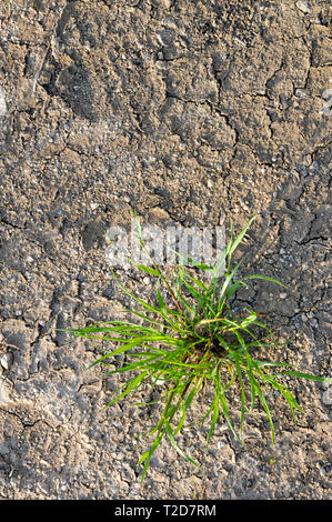 environmental concept, Water shortage and drought. Dry cracked mud - Stock Photo