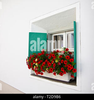 Typical swiss window with shutters in green and colorful flowers on the windowsill - Stock Photo