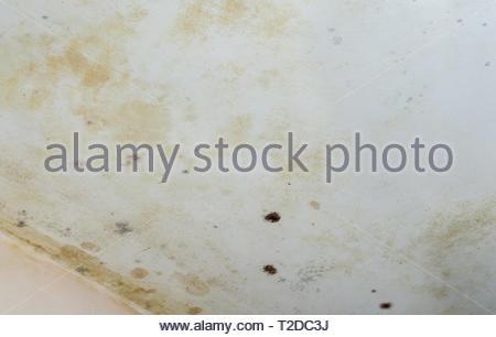 Mildew Mold Damage House Ceiling Stock Photo 222114653
