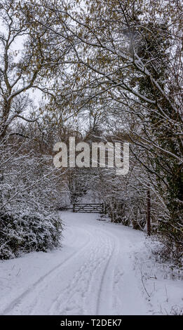 path through Cotswold Beech wood covered in fresh snow - Stock Photo