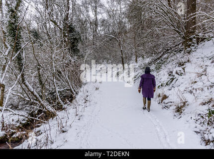 Lonely figure walking along  path through Cotswold Beech wood covered in fresh snow - Stock Photo