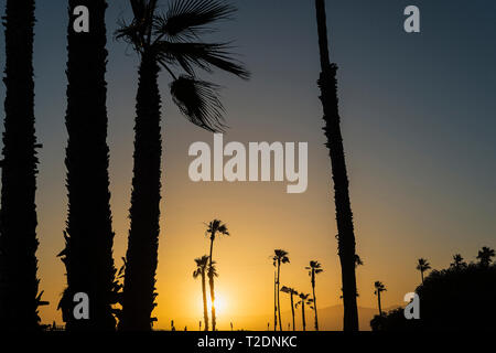 Palm trees lining the Venice Boardwalk in Los Angeles, California. - Stock Photo