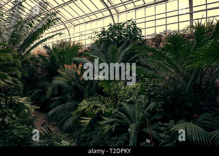 Tropical path with green tropical plants, palms and catuses at famous botanical garden in Munich.