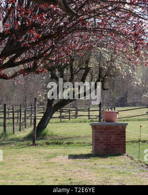 Beautiful partial views of country near Cortiglione d'Asti, in Monferrato, with horses in a fence - Stock Photo