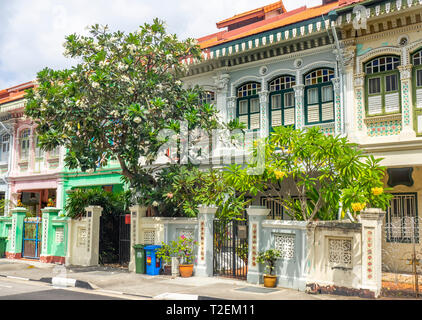 Frangipani tree in garden of Colourful Peranakan terraced houses popular with instagrammers on Koon Seng Road, Joo Chiat,  Geylang, Singapore. - Stock Photo