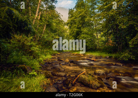 River flowing right through a forest with a mountain peak in the background covered in fog in the morning at sunrise - Stock Photo