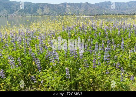 Lake Elsinore shoreline vista in springtime, Southern California - Stock Photo