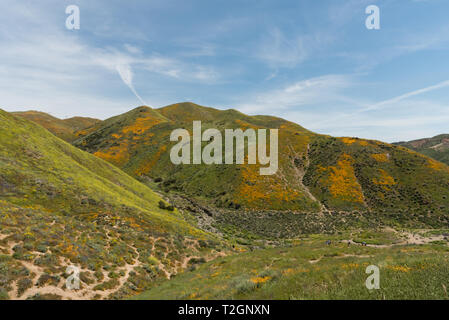 Beautiful superbloom vista in a mountain range near Lake Elsinore, Southern California - Stock Photo