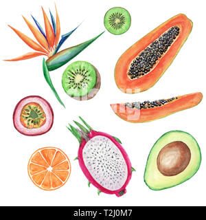 Watercolor tropical fruits set. Hand painted illustrations: avocado, papaya, orange, kiwi, maracuja and strelitzia on White background - Stock Photo