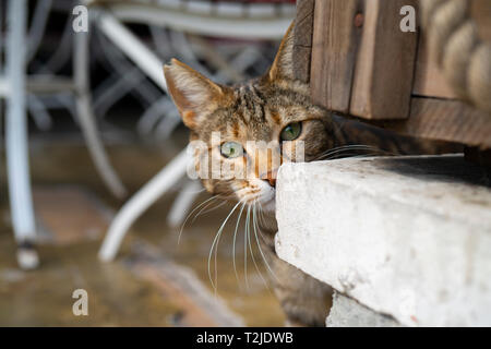 Cat face with big eyes on the blur background - Stock Photo