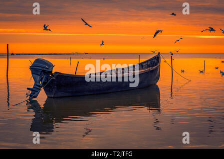 Detail of flying gulls birds above a lake with a motorized fishing boat in the foreground shot at sunrise in Romania during springtime - Stock Photo