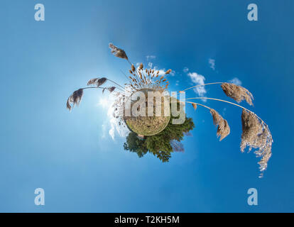 Little planet transformation with curvature of space. Spherical aerial 360 view panorama on the shore of lake with thickets of reeds in sunny summer - Stock Photo