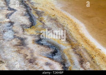 riparian closeup at a brine lagoon in the Camargue, a natural region in southern France - Stock Photo