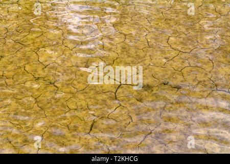 high angle riparian closeup at a brine lagoon in the Camargue, a natural region in southern France - Stock Photo