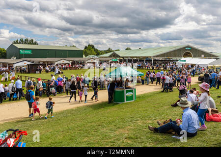 Day out for large crowd of people by showrings, sitting in sun & standing watching pigs in competition - Great Yorkshire Show, Harrogate, England, UK. - Stock Photo