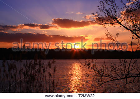 Close-up of vegetation at the water's edge at sunset. Bright sun on the horizon at night over a bright pond - Stock Photo