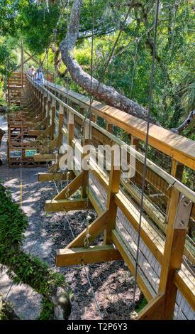 Canopy Walk suspension bridge tourist attraction in Myakka River State Park in Sarasota Florida, tree, trees - Stock Photo
