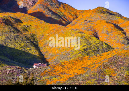 Landscape in Walker Canyon during the superbloom, California poppies covering the mountain valleys and ridges, Lake Elsinore, south California - Stock Photo