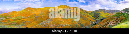 Panoramic view in Walker Canyon during the superbloom, California poppies covering the mountain valleys and ridges, Lake Elsinore, south California - Stock Photo