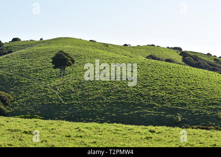 Green hills covered with grass pastures and patches of forest with occasional solitary tree in bright sunlight. - Stock Photo