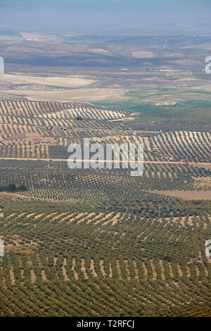 Olive tree fields in Andalusia. Spanish agricultural harvest landscape. Jaen - Stock Photo