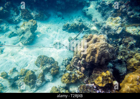 Anchor underwater sea coral reef rock colorful - Stock Photo