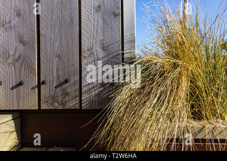 A withered yellow grass against the backdrop of vintage wooden planks. Beautiful decorations in agricultural Rustic style. - Stock Photo