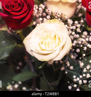 White rose in bouquet. Decorative floral arrangement of white and red roses - Stock Photo