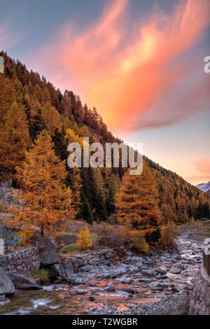 Italy, Valsavarenche, Gran Paradiso National Park, Massif du Grand Paradis, Savara stream,  European larch forest in autumn - Stock Photo